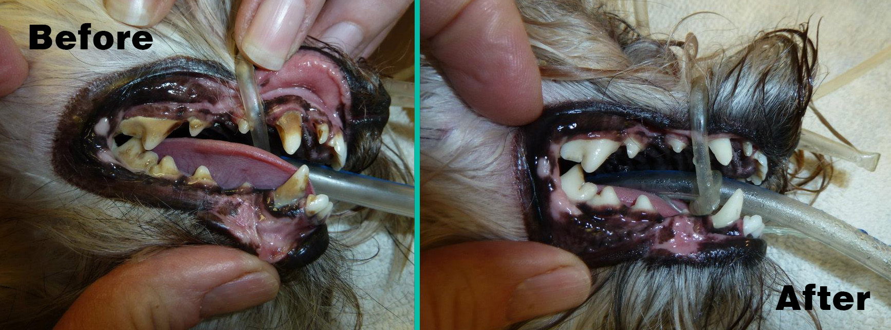 What Can Dogs Eat After Dental Surgery